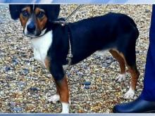 Pet of the Day - June 15, 2021
