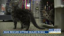 IMAGES: After miraculous recovery, kittens found abandoned in Wake Forest ready to be adopted