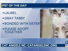 Pet of the Day, Oct. 13
