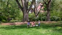 IMAGE: Chapel Hill Gardens