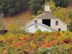 A historic barn is nestled in the vineyards along Valley of the Moon Highway.