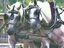 Carriage Driver Harnesses Romance of Wilmington