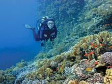 Close-in coral reefs make for outstanding snorkeling, and scuba divers can explore underwater caves, grottoes and shipwrecks.