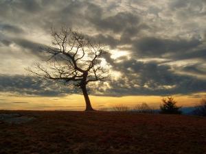 A winter landscape shot near the Blue Ridge Parkway in Alleghany County, N.C.
