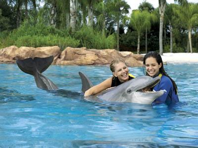 Discovery Cove offers a unique experience with dolphins, thousands of fish, rays and birds.