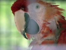 Exotic birds call North Carolina home