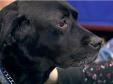 Dog helps Vance County kids learn to read