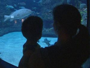 A woman holds a child as they look at fish at the North Carolina Aquarium at Fort Fisher in Kure Beach.