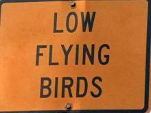 Birds flock to bridge near Manteo