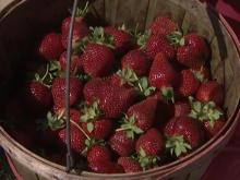 Time is ripe for strawberries at Jean's Berry Patch