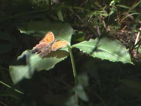 Hemlock Bluffs Nature Preserve, off Kildaire Farm Road in Cary