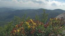Local folklore says that the devil holds court in a cave on Devil's Courthouse. The 5,720-foot peak, off mile marker 422.4 on the Blue Ridge Parkway, offers a view of four states. Hikers say the view is heavenly.