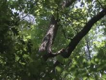 Trees in Johnston forest teach love of nature