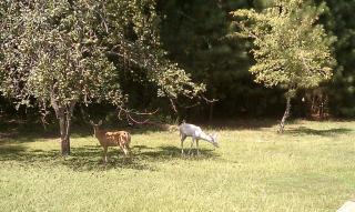 Wildlife Grazing