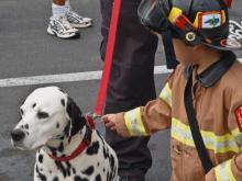 Angus the fire dog