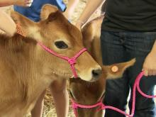 Macon County agrifair that last of its kind in NC