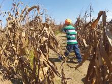 Sylvan Heights corn maze