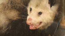 IMAGES: State gives green light to annual Possum Drop