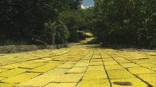 IMAGES: Land of Oz still lives in NC