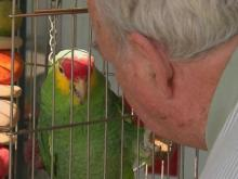 Parrot's birthday party delights owner