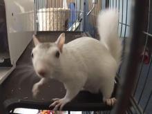 white squirrel lady
