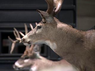 Dixie Deer Classic
