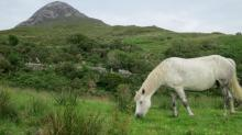 IMAGES: Connemara a place of beauty, serenity