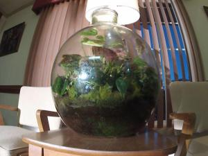 At an optometrist's office in Roanoke Rapids, a terrarium has sat atop a table in the waiting room for nearly 50 years. Patients and doctors have come and gone from the practice, but the plants - encased in their glass globe - remain.