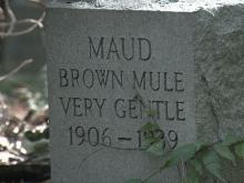 Mule graveyard
