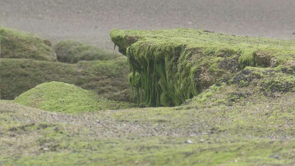 Unusual Rock Formation On Display At Kure Beach Wral