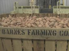 Nash County farm owner is sweet potato king