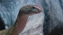 IMAGES: Deadly creatures on display at Cape Fear Serpentarium
