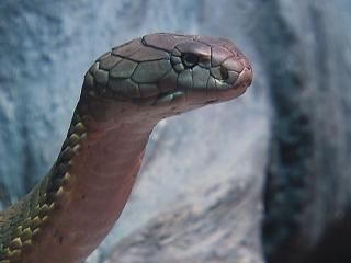 The Cape Fear Serpentarium in Wilmington houses all types of venomous snakes from around the world along with alligators and other reptiles.