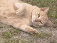 Bubba the Cat