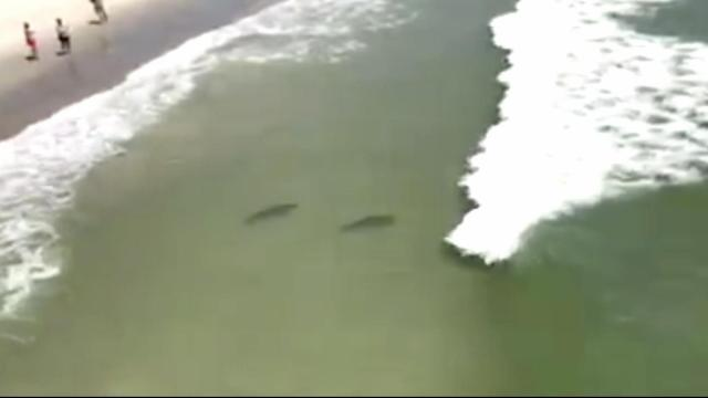 Video shows sharks swimming close to Myrtle Beach shore