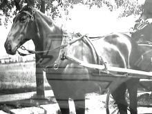'Firehorse Fred' helped save lives in New Bern