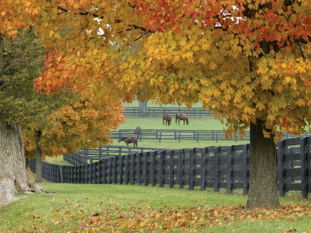 -- PHOTO MOVED IN ADVANCE AND NOT FOR USE - ONLINE OR IN PRINT - BEFORE OCT. 14, 2018. -- In a handout photo from VisitLEX, Lexington, Ky., the capital of American horse country and the 15-county Bluegrass Region. Eager to expand audiences for racing, stately horse farms, noted for their architecturally distinct barns and pastures encircled by double-railed fences, are throwing open the barn doors to tours. (Gene Burch/VisitLEX via The New York Times) NO SALES; FOR EDITORIAL USE ONLY WITH NYT STORY SLUGGED KY LEXINGTON ATTRACTIONS BY ELAINE GLUSAC FOR OCT. 14, 2018. ALL OTHER USE PROHIBITED. --