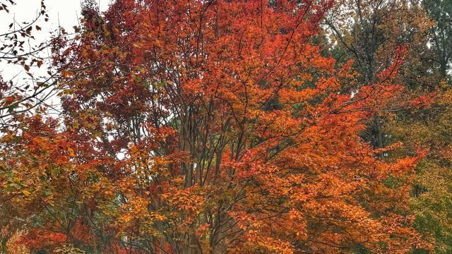 Bill Leslie: Fall foliage frustrations