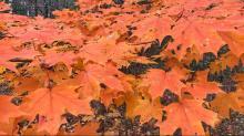 IMAGES: Bill Leslie: November windsong