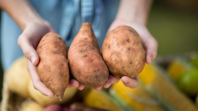 Around 60 percent of sweet potatoes from Vick Family Farms are consumed overseas, primarily in Europe.