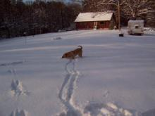 "Mandy playing ""fetch"" in the snow."
