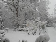 White Christmas in Raleigh 2010 J.E.S.