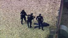 Sky 5: Raleigh police detain suspect on theater rooftop