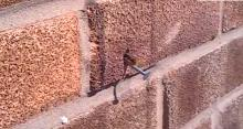 IMAGE: Have You Seen This? Honeybee pulls out metal nail