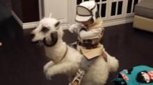 IMAGE: Have You Seen This? Little boy's homemade tauntaun costume wins Halloween