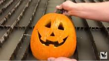 IMAGE: Have You Seen This? Man carves jack-o-lantern Harambe in less than 30 seconds