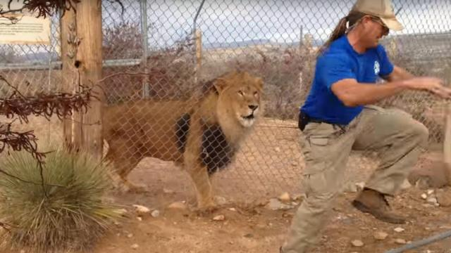 Sometimes it's hard to practice what you preach, especially when you work with big cats. (Deseret Photo)