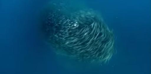 Have You Seen This? Real life 'fish tornado' puts 'Sharknado' to shame. (Deseret Photo)