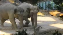 IMAGE: Have You Seen This? Baby elephant's adorable first steps
