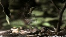 IMAGE: Have You Seen This? The net-casting spider
